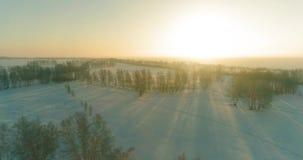 寒冷冬天风景空中寄生虫视图与北极领域,树的用霜雪和早晨太阳光芒包括 股票视频