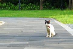贫寒和受伤的无家可归的猫在公园道路 免版税库存图片