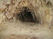 寒带草原动物的洞穴的照片 库存图片