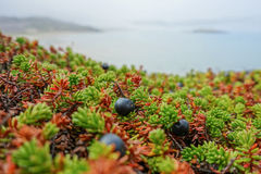 寒带草原和海洋 免版税库存照片