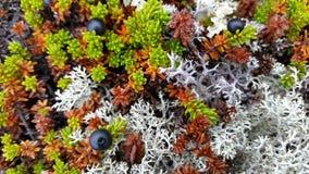 寒带草原和海洋 免版税图库摄影