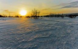 寒带草原在冬天 库存图片