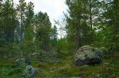 寒带草原在夏天 免版税库存照片