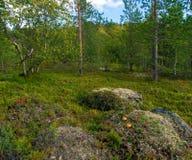 寒带草原在夏天 库存图片