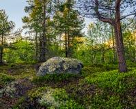 寒带草原在夏天 库存照片