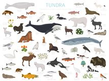 寒带草原生物群系 地球生态系世界地图 北极动物、鸟、鱼和植物infographic设计 皇族释放例证