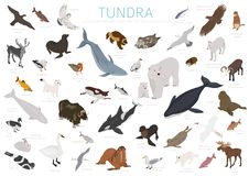 寒带草原生物群系 等量3d样式 地球生态系世界地图 北极动物、鸟、鱼和植物infographic设计 皇族释放例证