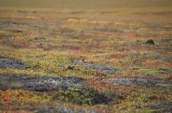 寒带草原的秋天颜色 库存图片