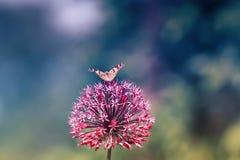 察觉了一只美丽的蝴蝶坐装饰Luka 库存照片