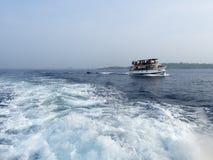 察觉鲸鱼在斯里兰卡 免版税库存照片