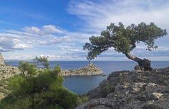 寡妇在峭壁的杜松树在海上 克里米亚 免版税图库摄影