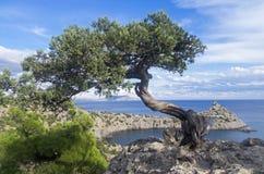 寡妇在峭壁的杜松树在海上 克里米亚 图库摄影