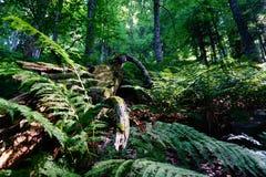 寡妇森林 库存图片