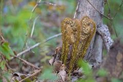 寡妇蕨在森林里 库存图片