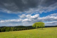 对一个森林的看法在埃菲尔山,德国 免版税库存照片