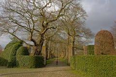 对一个花梢庭院的入口有橡树和被整理的树篱车道的  免版税库存图片