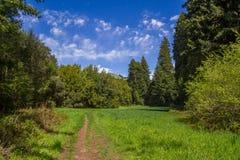 在一串足迹的土道路到有蓝天和补凑云彩的森林里 免版税图库摄影