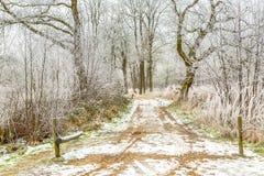 对一条冷淡的森林车道的入口门 图库摄影