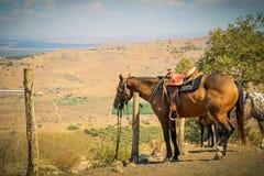 对一根杆的马领带在乡区的一个大农场 免版税库存照片