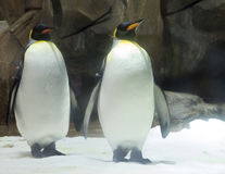 对企鹅国王 库存照片