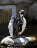对企鹅 图库摄影