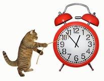 对停止时间的猫尝试 免版税库存照片