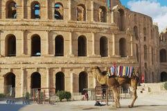 对入口的看法对杰姆圆形剧场在杰姆,突尼斯 免版税图库摄影