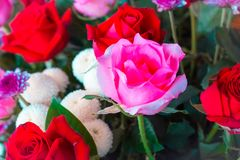对创造性的样式和纹理的葡萄酒玫瑰色花淡色 库存图片