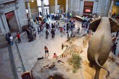 对史密松宁自然历史博物馆的入口 免版税库存图片