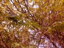 对叶子自然的特写镜头 库存照片