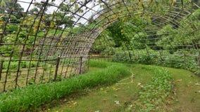 对后院庭院的绿色藤隧道 图库摄影
