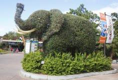 对圣地亚哥动物园的入口有大象修剪的花园的 库存图片