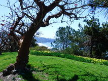 对圣地亚哥岸的美丽的景色有树和绿色的 图库摄影