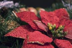 对圣诞节的大红色装饰花 免版税库存图片