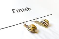 滑对在比赛的结束的两只蜗牛 图库摄影