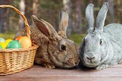 对复活节兔子 免版税图库摄影