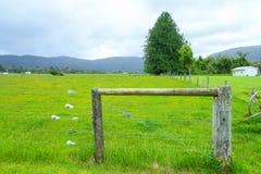 对夏天绿色牧场地, Fox冰川,新西兰的门 免版税库存图片