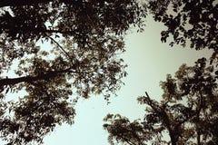 对天空的树伸手可及的距离在葡萄酒颜色 库存照片