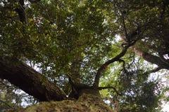 对天空的树 免版税库存图片