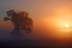 对太阳的弓 免版税库存照片
