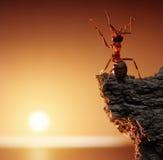 感恩,蚂蚁传说 图库摄影