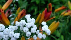 对婚姻的美丽的白花装饰 股票录像