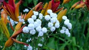 对婚姻的美丽的白花装饰 股票视频