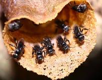 对室外的宏观蜂昆虫飞行 库存图片