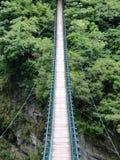 对密林的桥梁 库存图片