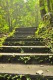 对密林的楼梯 免版税库存图片