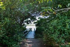 对小木船坞的路在湖,盖在植被 湖在背景中能被看见 Marapendi盐水湖,里约 库存照片