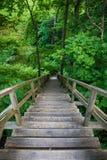 对山森林的木楼梯 库存照片