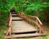 对山森林的楼梯 免版税库存图片