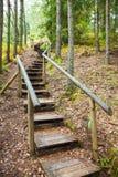 对山森林,在储备的自然痕迹的楼梯 免版税库存照片